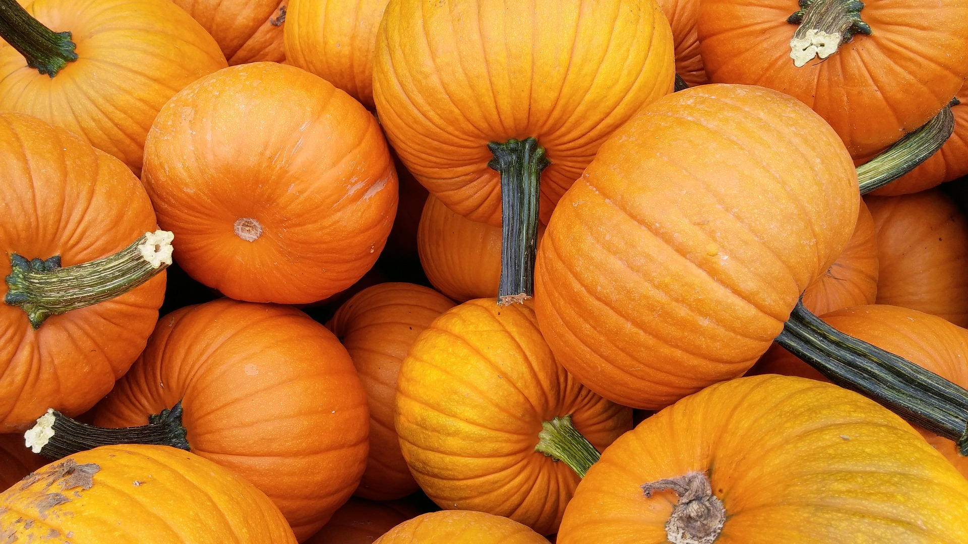 Eat More Pumpkin for Eye Health